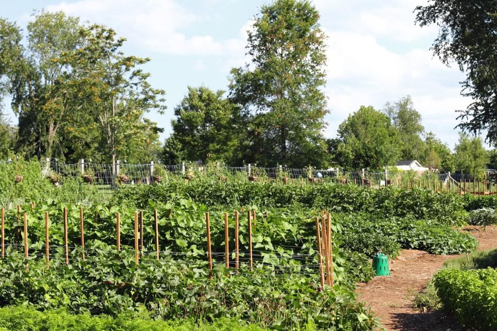 vegetable garden at the Inn at Little Washington