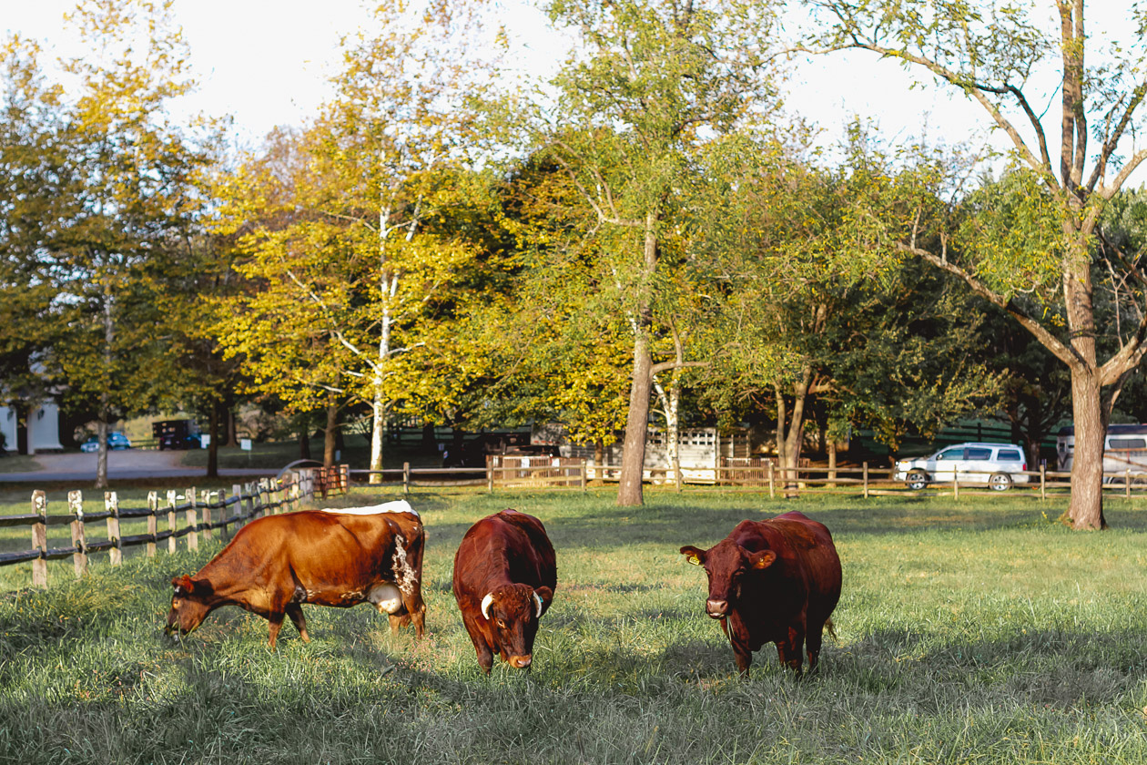 Ayrshire Farm, Virginia