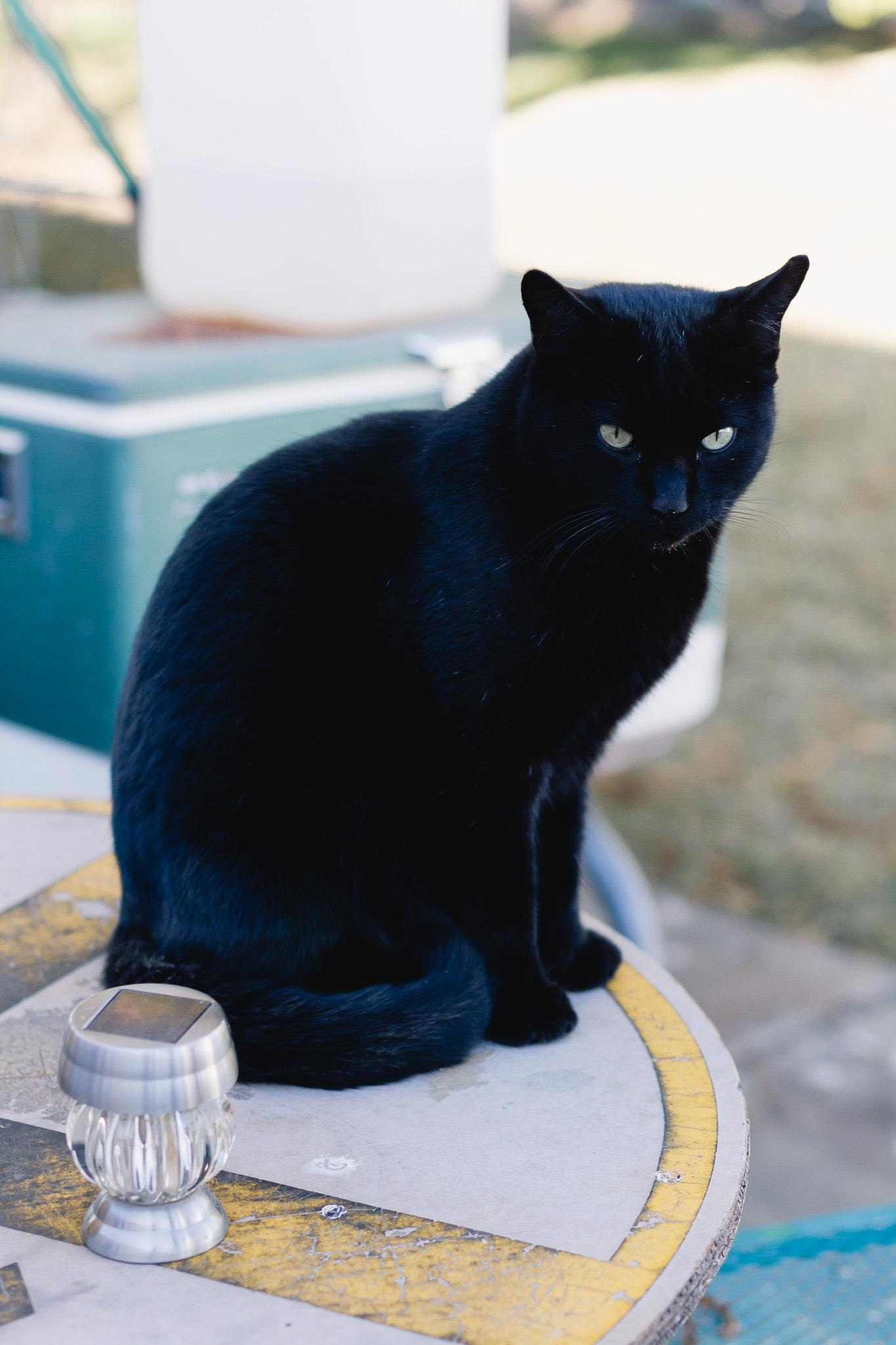 New Mexico cat